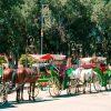 Marrakech Tour By Caleche